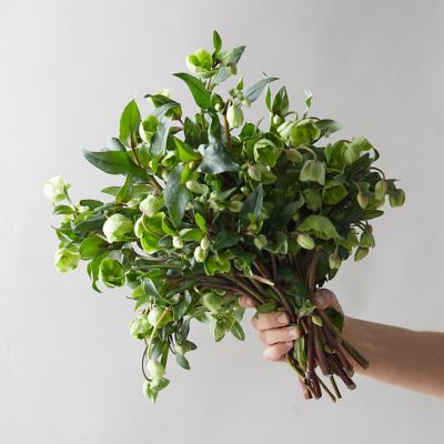 Fresh Hellebore Bouquet