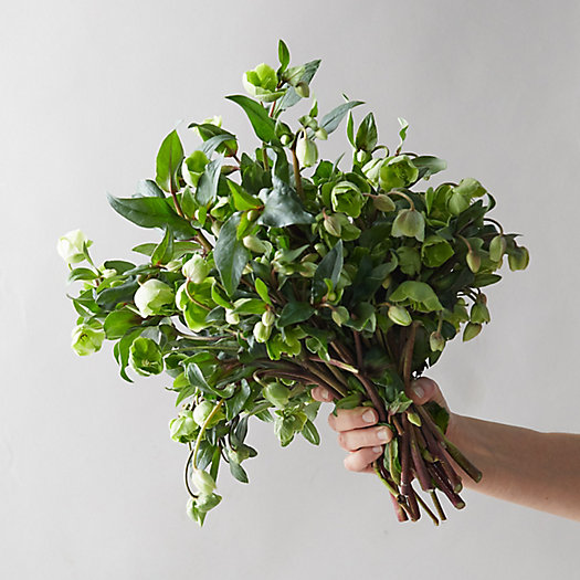 View larger image of Fresh Hellebore Bouquet