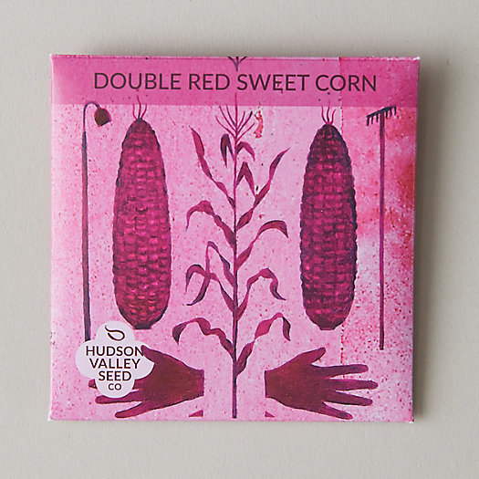 View larger image of Double Red Sweet Corn