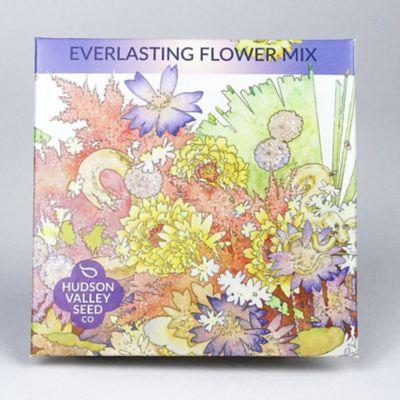 Everlasting Flower Mix Seeds