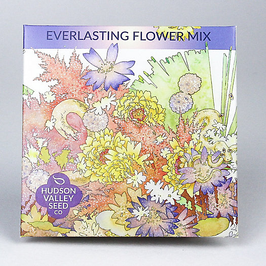 View larger image of Everlasting Flower Mix Seeds