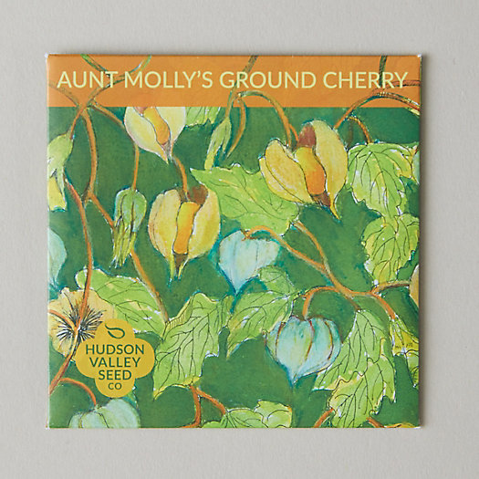 View larger image of Aunt Molly Ground Cherry Seeds