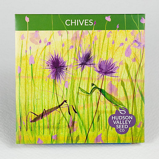 View larger image of Chive Seeds