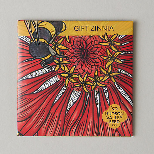 View larger image of Gift Zinnia Seeds