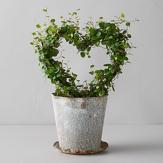 View larger image of Angel Vine Heart Topiary, Metal Pot