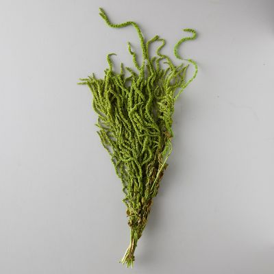 Preserved Amaranthus Bunch