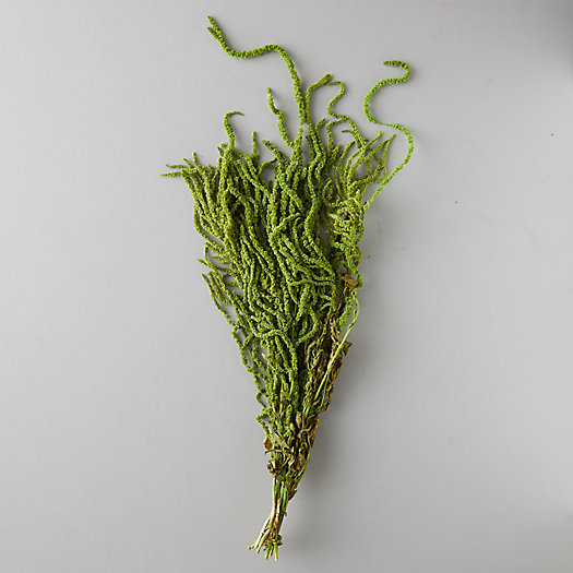 View larger image of Preserved Amaranthus Bunch