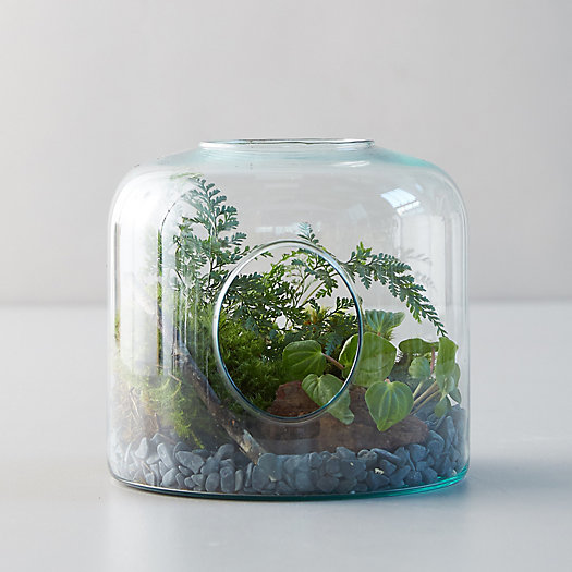 View larger image of Wide Vase Terrarium