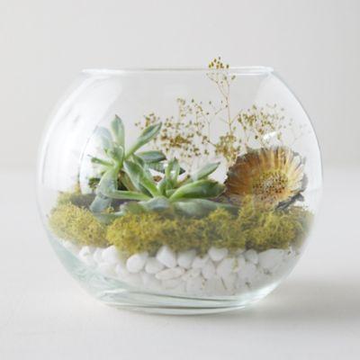 Fish Bowl Terrarium Terrain