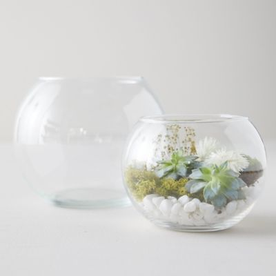 Fish Bowl Terrarium