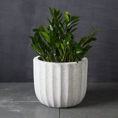 Barnacle Ridged Pot