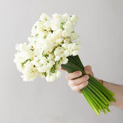 Fresh Narcissus Cheerful Bunch
