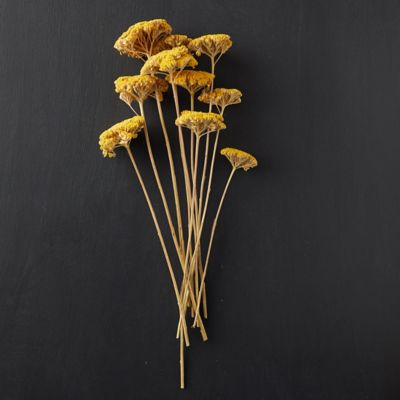 Dried Yarrow Bunch