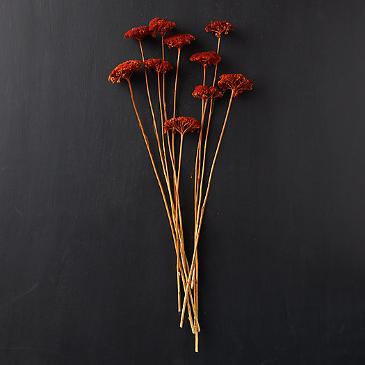 View larger image of Dried Yarrow Bunch