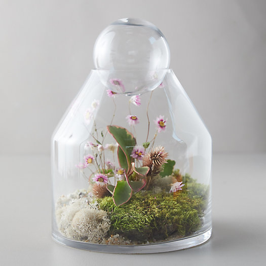 View larger image of Tall Ball-Top Terrarium