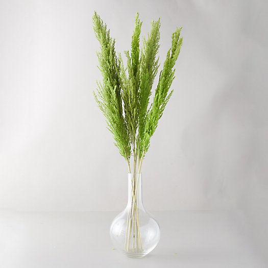 View larger image of Preserved Pampas Grass Bunch