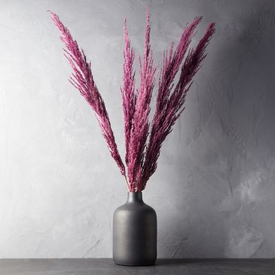 Preserved Pampas Grass Bunch