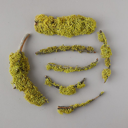 View larger image of Lichen Branch Topper