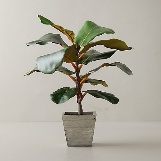 View larger image of Faux Fiddle Leaf Fig Tree, 18