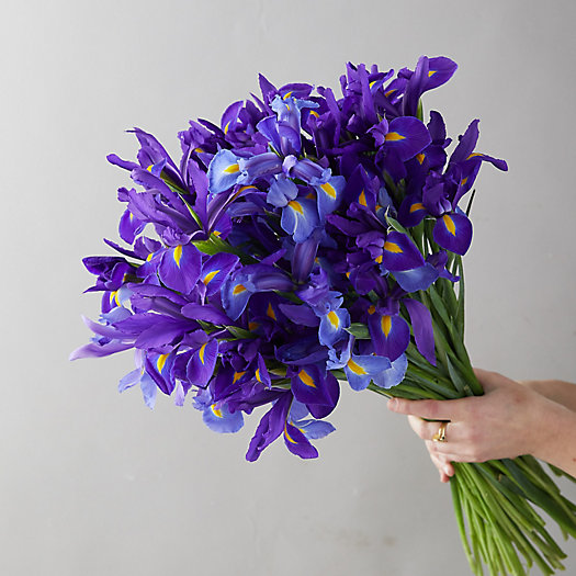 View larger image of Fresh Iris Bunch