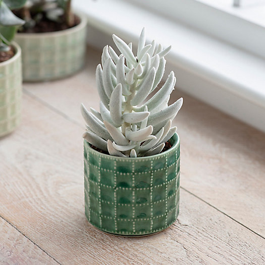 View larger image of Sorrento Ceramic Pot