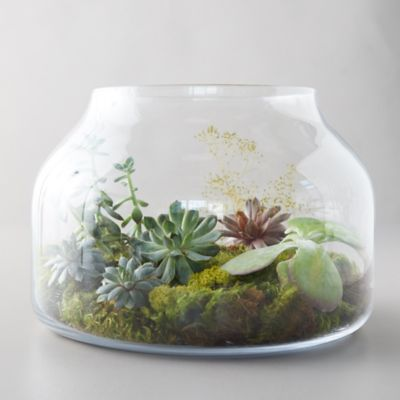 Low Wide Glass Terrarium
