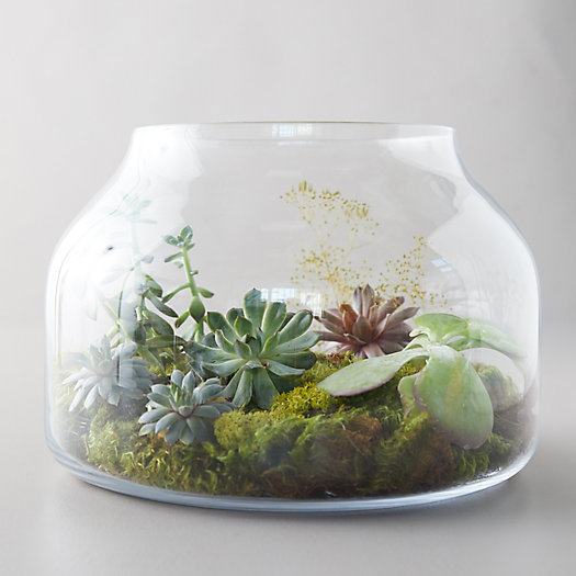 View larger image of Low Wide Glass Terrarium