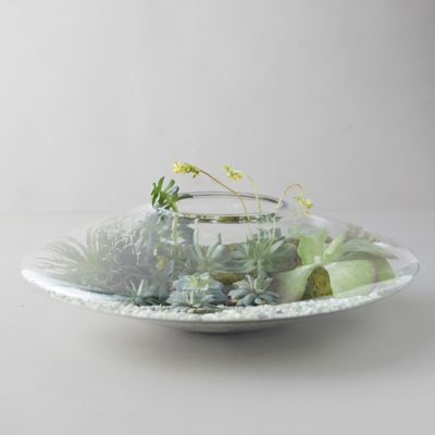 Orb Glass Terrarium