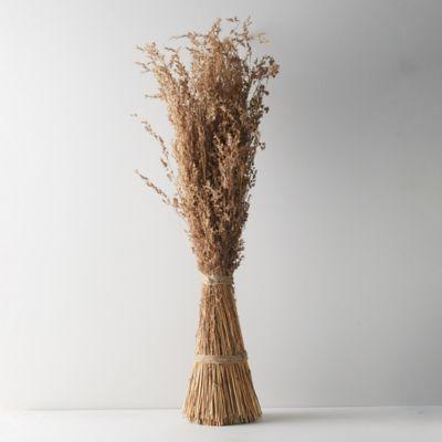 Dried Alpha Grass