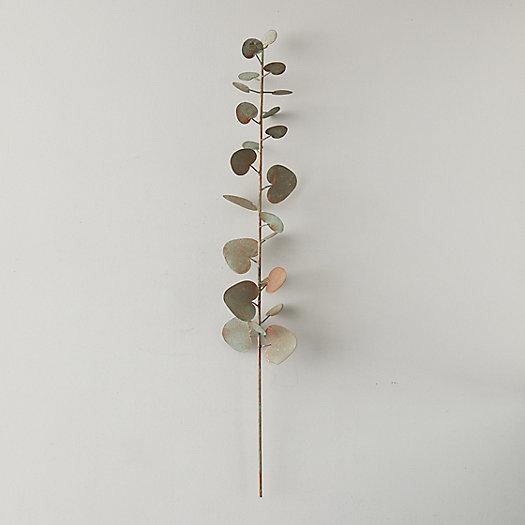 View larger image of Iron Eucalyptus Stem