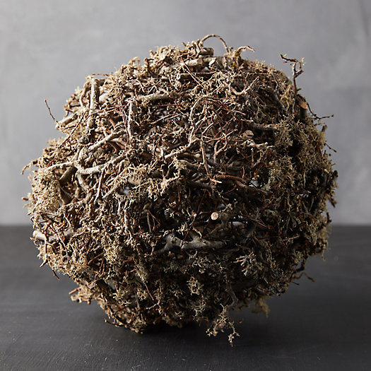 View larger image of Preserved Mossy Sphere