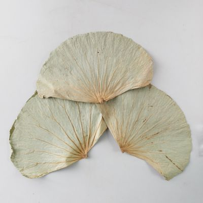 Dried Lotus Leaves, Set of 18