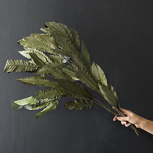 View larger image of Preserved Chestnut Leaf Bunch