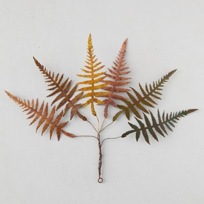 Iron Fall Fern Bundle