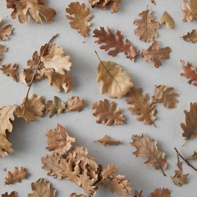 Dried Oak Leaves