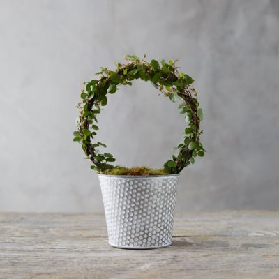 Angel Vine Topiary, Dot Pot