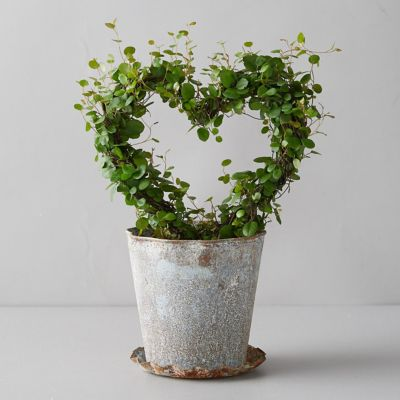 Angel Vine Heart Topiary, Metal Pot