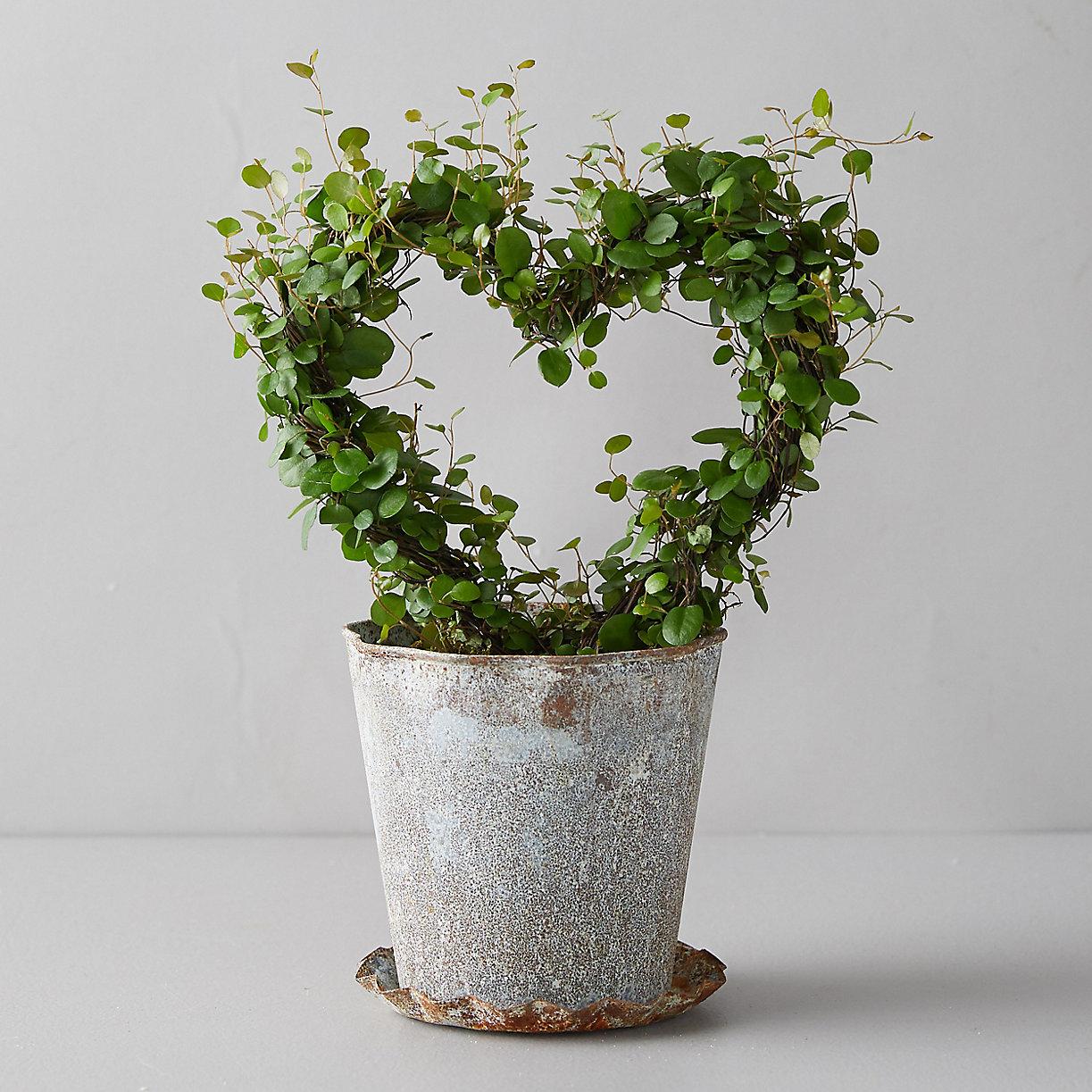 Angel Vine Heart Topiary, Metal Pot