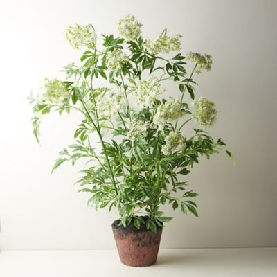 Faux Potted Queen Anne's Lace Plant
