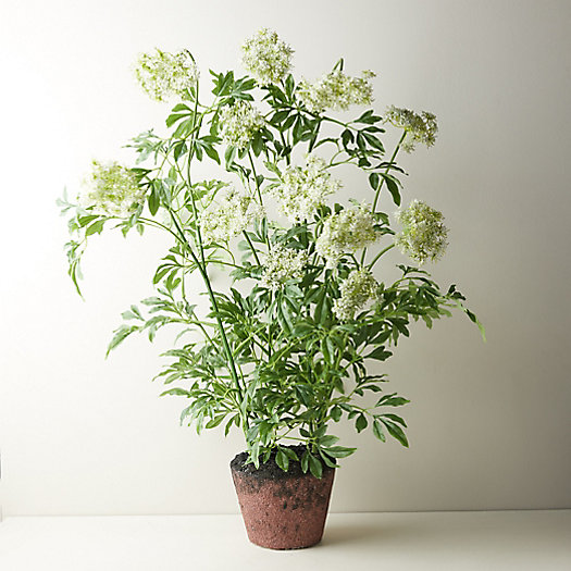 View larger image of Faux Potted Queen Anne's Lace Plant