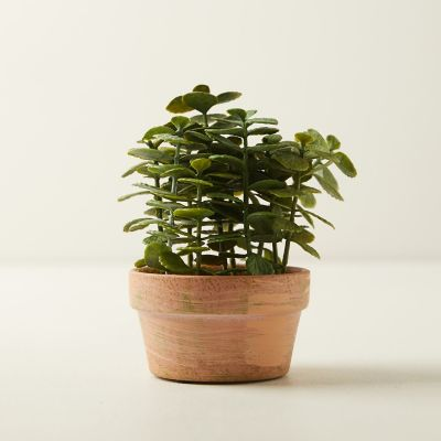 Faux Potted Jade Plant