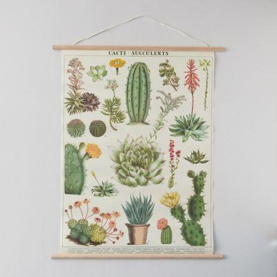 Succulents Poster + Frame
