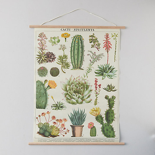 View larger image of Succulents Poster + Frame