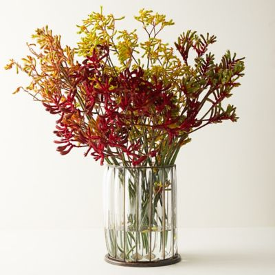 Fresh Kangaroo Paw Bunch