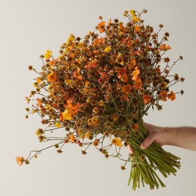 Fresh Orange Geum Bunch