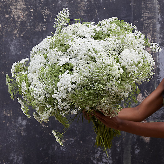 View larger image of Fresh Queen Anne's Lace Bunch