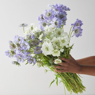 Fresh Blue + White Scabiosa Bunch