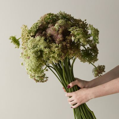 Fresh Chocolate Queen Anne's Lace Bunch