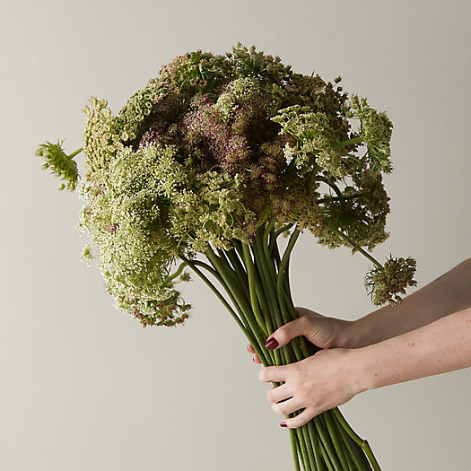 View larger image of Fresh Chocolate Queen Anne's Lace Bunch
