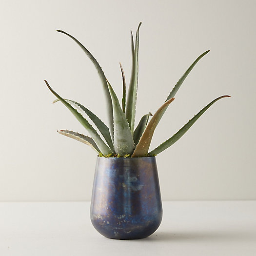View larger image of Aloe Plant, Blue Pot